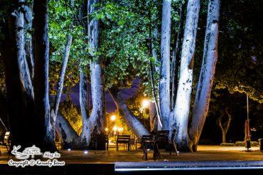 Éjszaka a Margitszigeten