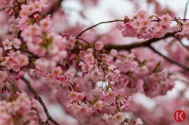 Vác tavasszal