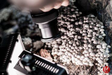 Normafa – kis világ az erdő sűrűjében